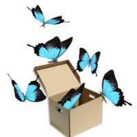 Mariposas vivas