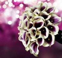 Tipos de Flores