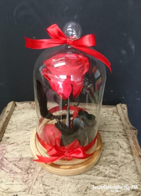 Chinchilla For Sale >> ESP1001 - Rosa Eterna. Rosa encapsulada (rosa conservada)