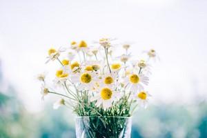 flores costa rica