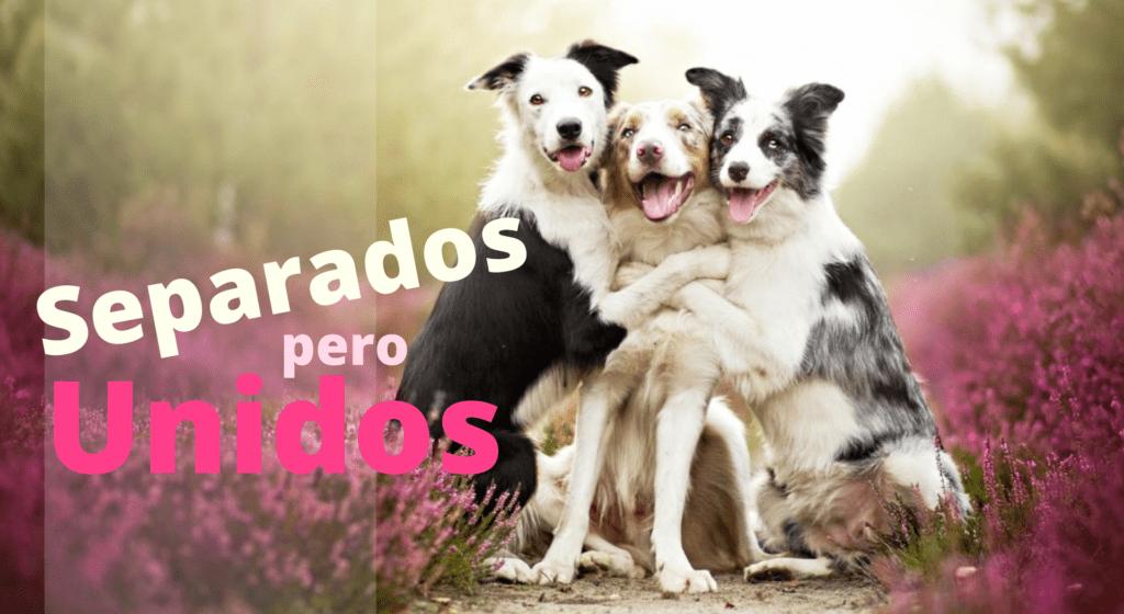 #MasJuntosQueNunca